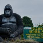 8 Day Rwanda Holiday Safari