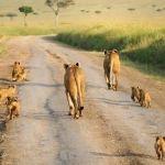 Serengeti Migration Area