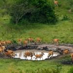 Lake Mburo National Park