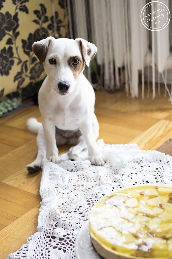 Sissi - Jack Russell Terier