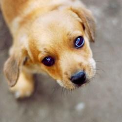 Small Crop Of Sad Puppy Gif