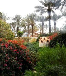 Breakfast with a refreshing view #lovemylife #hotellife #beautifulview #greenary #scenic #palmtrees #birdhouse #relaxing #enjoylife #fujairah #lemeridien