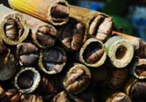 umpan ikan ulat bambu