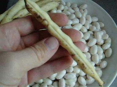 Astuce # 2 - écosser des cocos de paimpol