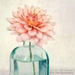 Primavera = Flores + Luz