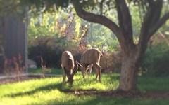 @jasmineharouny: Saw the cutest deer on the way back to my dorm! #bestfirstday #nobigdeal #BYU #nofilter #gottalovecollege