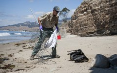 Mike Harris, of the California Department of Fish and Wildlife, prepares to rescue a pelican covered in oil on the beach about a mile west of Refugio State Beach, Calif., Wednesday, May 20, 2015. A broken onshore pipeline spewed oil down a storm drain and into the ocean for several hours Tuesday before it was shut off. (Kenneth Song/The News-Press via AP) MANDATORY CREDIT; SANTA MARIA TIMES OUT
