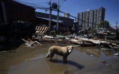 A dog stands in a flooded street among debris left behind by an earthquake-triggered tsunami in the coastal town of Coquimbo, Chile, Thursday, Sept. 17, 2015. Several coastal towns were flooded from small tsunami waves set off by late Wednesday's quake, which shook the Earth so strongly that rumbles were felt across South America. (AP Photo/Luis Hidalgo)
