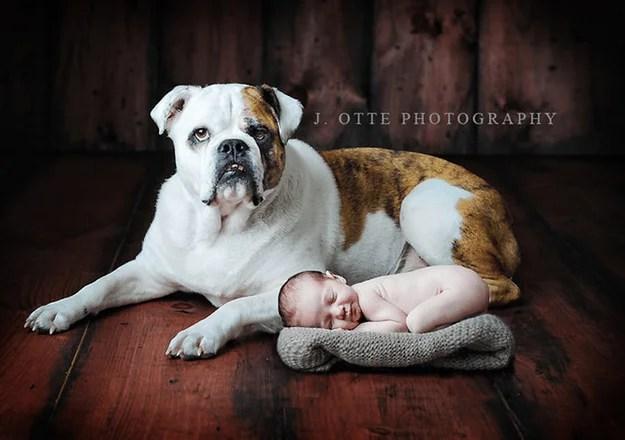 neonato addormentato vicino a cane