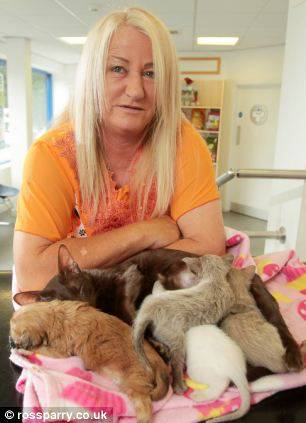 Paula Ball e animali