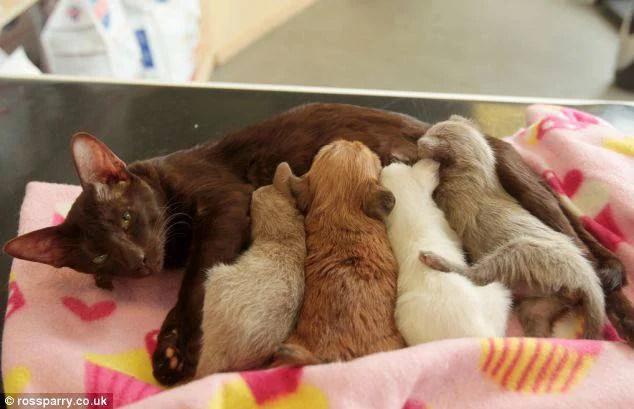 gatta allatta cuccioli e anche cane