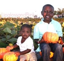2011 Pumpkin Patch