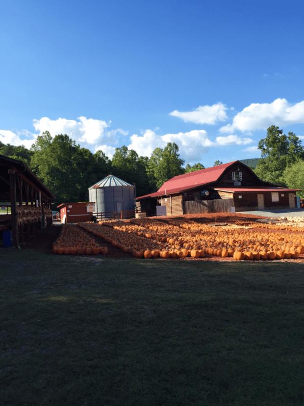 Burts Farm