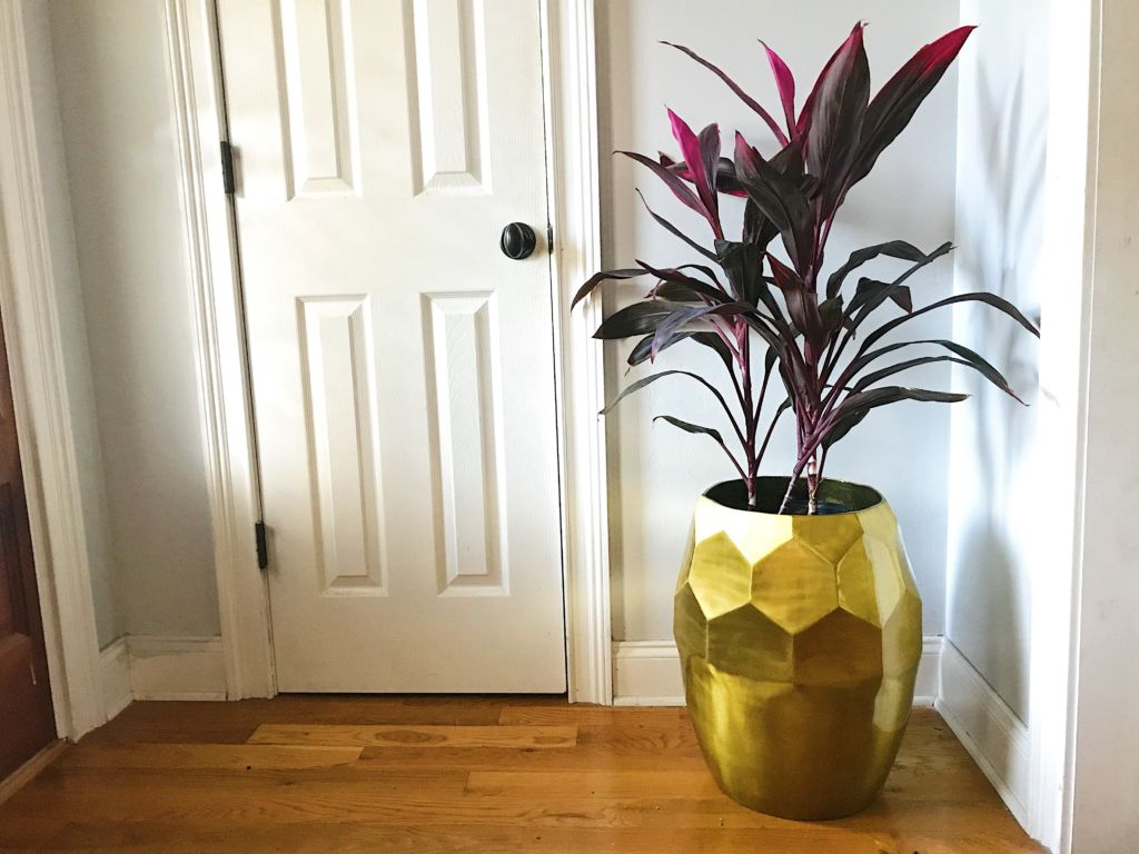 Houseplant Decor
