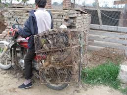 transport de chiens destinés à être mangés