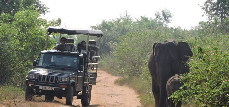 Parc nationa de Yala au Sri Lanka