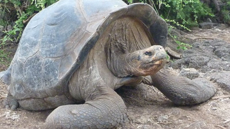 Les Galapagos en images