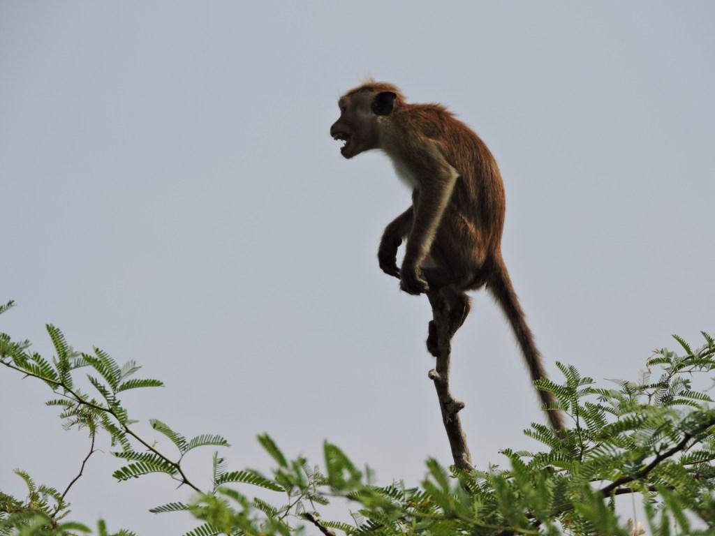 safari à bundala sri lanka
