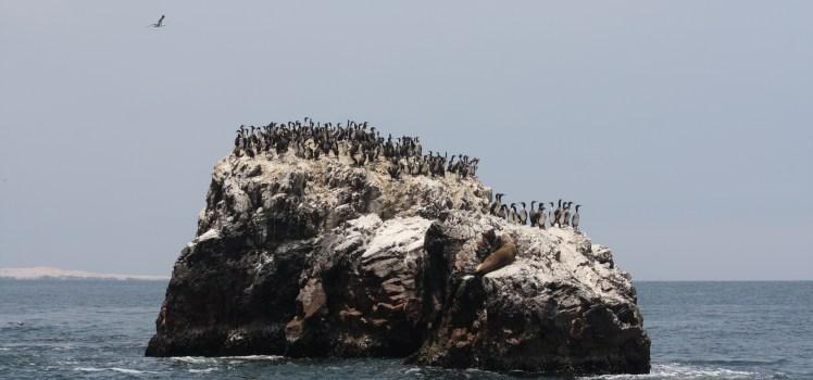 îles ballestas pérou