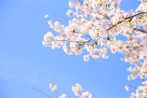 春一番条件由来関東関西