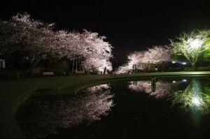 九州宮崎桜見ごろ花見オススメスポット