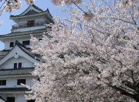 佐賀の桜開花情報2015!ライトアップされる穴場スポットは?