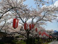 【兵庫】桜のイベント情報│オススメのライトアップや夜桜はどこ?
