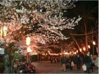 大阪の桜 名所を紹介!オススメのスポットはここだ!