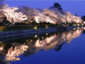 京都桜オススメ花見スポット2015