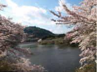 【奈良】桜の名所と穴場│夜桜のオススメはどこ?