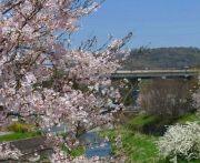 岐阜 桜 見ごろ情報│オススメのライトアップ公園や祭りが開催されるスポットはここ!