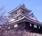 静岡の桜と富士山を同時に見られるスポットは?花見オススメ2015