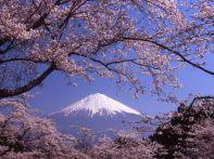 静岡の桜の開花情報を紹介!各スポットの見ごろはいつ?