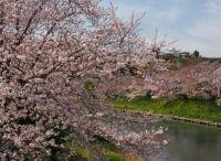 【静岡】桜の名所をご紹介│オススメのスポットはここ!