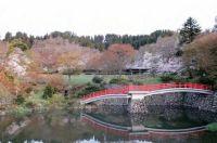 富山の桜の見ごろはいつ?各スポットの詳細情報を紹介!