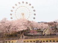 青森 桜の名所 開花予想2015│見頃の時期は?