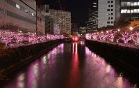 目黒川桜のイルミネーション2015時間は?場所は?青の洞窟は中止?