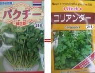 パクチーの栽培・育て方は?発芽率アップのコツは種を水に浸けて割る!