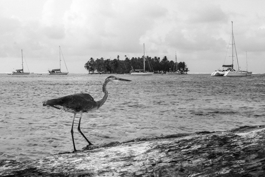 Vogel, Guna Yala/San Blas, Panama (c) Veronika C. Dräxler