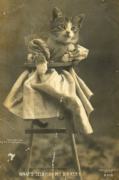 1905 cat postcard by Harry Whittier Frees