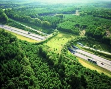 wildlifebridge