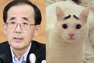 猫顔の芸能人の画像を貼っていくトピ