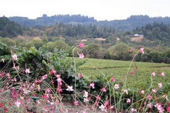 English: Dry Creek Valley in Sonoma County
