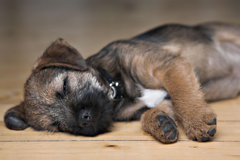 Fullsize Of Why Do Dogs Shake