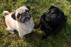 Small Of Dog Breeds That Start With B