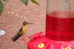 Small Of When To Stop Feeding Hummingbirds