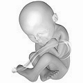 Fetus at 38 weeks after fertilization 3D Pregn...