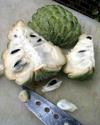 File:Custard Apple.jpg