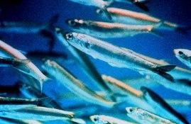 fish oil omega 3 health