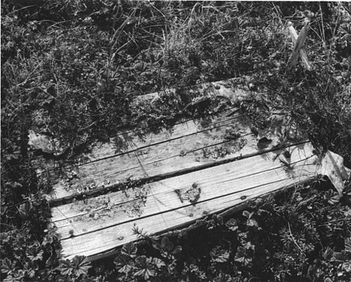 Vintage photo of exsposed wooden coffin and cross